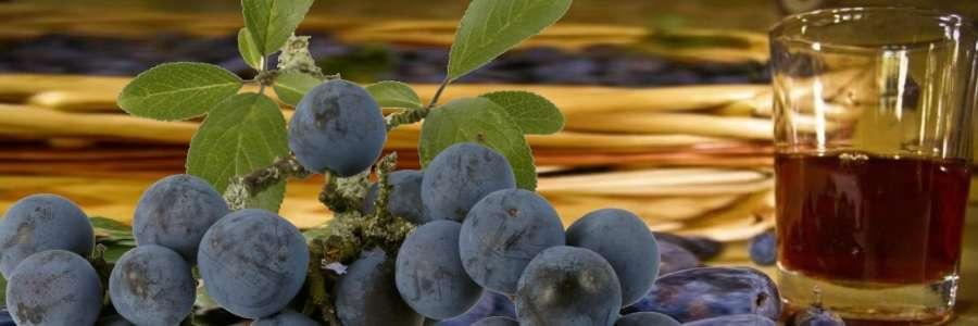 Вино из терносливы