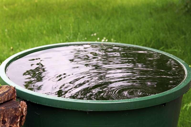 Дождевая